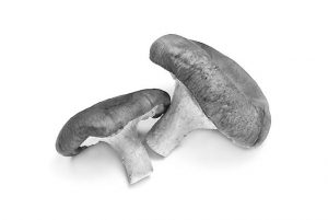 Mushrooms for Cancer Prevention:  One of the Healthiest Foods on the Planet