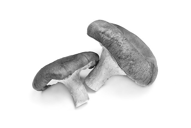 Read more about the article Mushrooms for Cancer Prevention:  One of the Healthiest Foods on the Planet