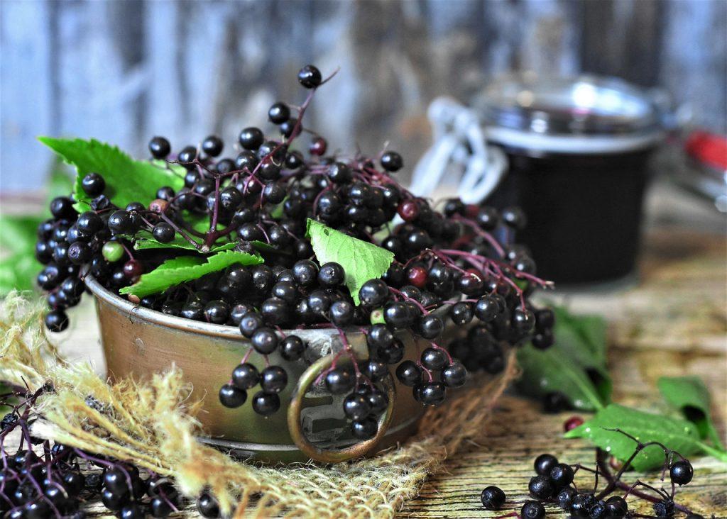 Sprigs of fresh raw elderberries.